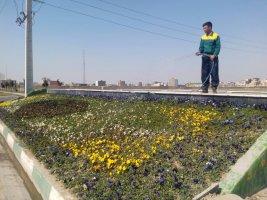 شهر ملارد با کاشت گلهای فصلی به استقبال از بهار می رود