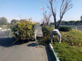 درختان غیر مثمر شهر هرس می شوند