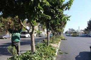 مرتب سازی و هرس درختان بلوار رسول اکرم (ص) توسط شهرداری ملارد