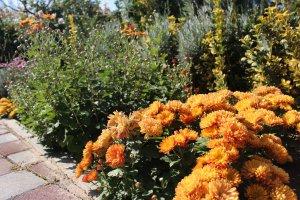 بوستان گیاه شناسی برکت در فصل پاییز رنگارنگ می شود