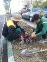 ایجاد روحیه و تداوم نشاط در بین شهروندان با کاشت گلهای رنگارنگ فصلی