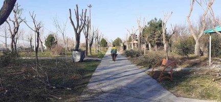 هرس درختان و کود پاشی سطوح فضای سبز همچنان ادامه دارد