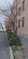 در فصل زمستان حفظ و نگهداری فضای سز شهر ملارد همچنان ادامه دارد